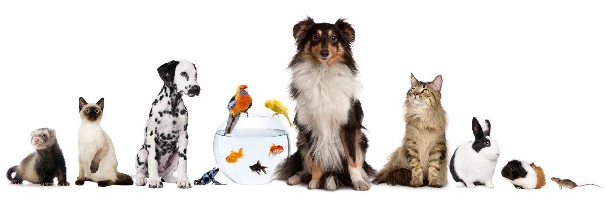 Dierendag een feest voor dieren