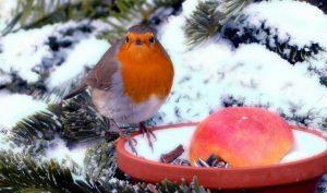 BIOnyx Tuin winter klaar maken